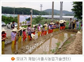 모내기 체험(서울시농업기술센터)