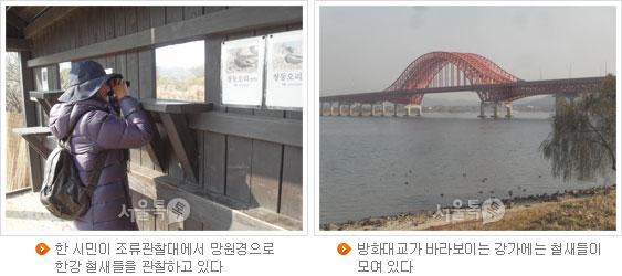 한 시민이 조류관찰대에서 망원경으로 한강 철새들을 관찰하고 있다(좌), 방화대교가 바라보이는 강가에는 철새들이 모여 있다(우)