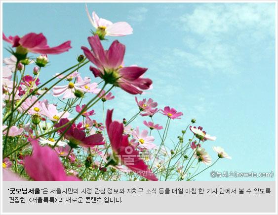 굿모닝서울`은 서울시민의 시정 관심 정보와 자치구 소식 등을 매일 아침 한 기사 안에서 볼 수 있도록 편집한 [서울톡톡]의 새로운 콘텐츠 입니다.