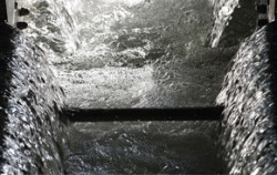 정수(사진 뉴시스)