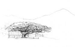 석파정 소나무