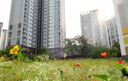 도시정원 조성 후 모습 (가재울 야생화단지)