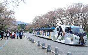 봄이 다 가기 전에 서울대공원 가자~