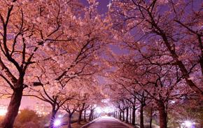 '벚꽃 엔딩'이라지만 봄꽃 명소 1위는?
