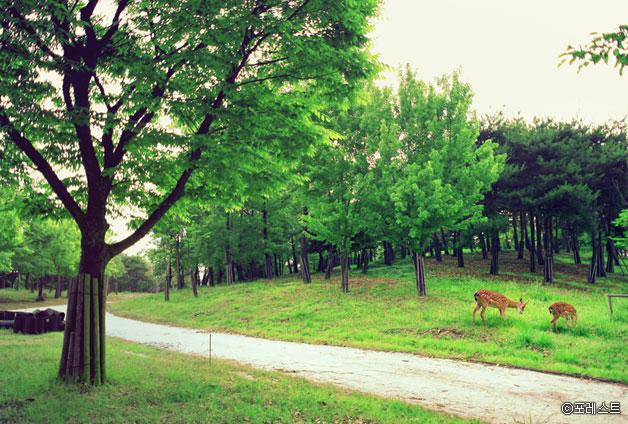 서울숲의 꽃사슴 ⓒ포레스트