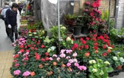 종로 꽃시장