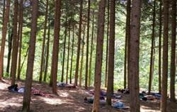 서울대공원 숲