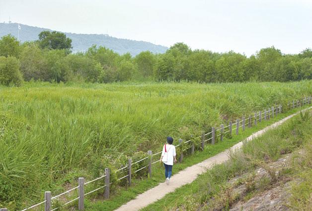 갈대와 억새가 우거진 암사생태경관보전지구와 나란히 걷는 둘레길