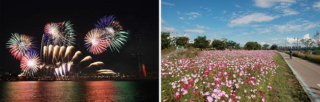 서울 세계 불꽃 축제(좌), 이촌한강공원 코스모스풍경(우)
