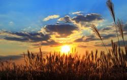 마포구 하늘공원 억새밭 ⓒ필에프터