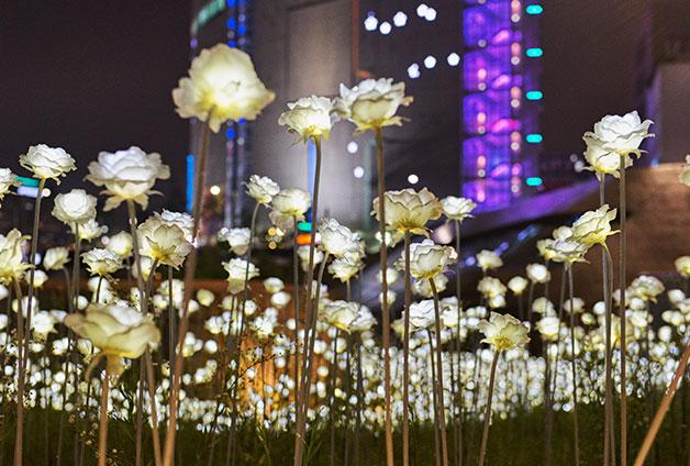 LED 장미정원에서 프로포즈 이벤트도 펼쳐진다