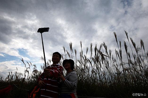 억새밭이 펼쳐진 배경 앞에서 시민들이 사진을 찍느라 여념이 없다 ⓒ연합뉴스