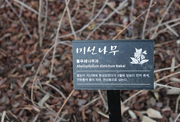 열린 녹지에 심어놓은 미선 나무. 내년 봄에 꽃이 필 예정이다