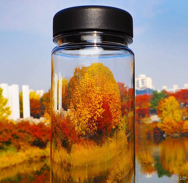 가을, 물병에 채우다 Ⓒ강소라