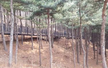 호암늘솔길은 전 구간이 잣나무 숲 속을 통과하는 나무데크로 조성된 무장애 산책길이다