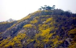 서울숲에서 바라본 응봉산