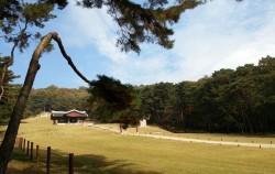 소나무 숲으로 잘 가꾸어진 서오릉