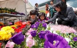 서울광장에서 열리는 `봄 꽃 나무 나눔 시장`을 찾은 시민들 ⓒ연합뉴스