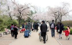 서울어린이대공원 벚꽃길을 지나가는 시민들. 유모차와 휠체어도 보인다