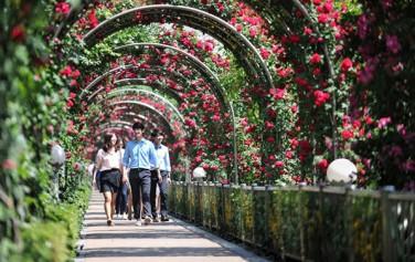 작년 장미축제에서 장미터널을 지나가는 사람들 ⓒ중랑구청