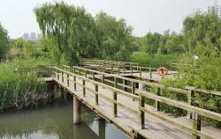 생태연못 위에 설치된 나무데크 무장애 산책로 모습