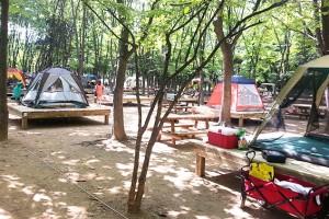 샤워장까지 갖춘 도심 공원 캠핑장!