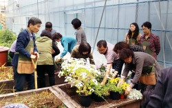 `서울, 꽃으로 피다` 캠페인 일환으로 올해 상반기에 실시한 '실내식물 가꾸기 교육현장