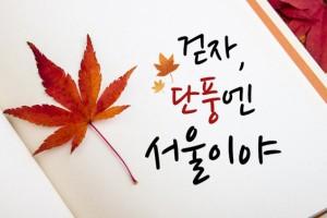 """[비교체크VS] 서울 단풍길 """"커플데이트 VS 우정데이트"""""""