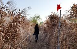 물억새 산책길은 폭신한 흙길로 산책하기 좋다.ⓒ최용수