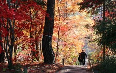 찬란한 가을 단풍 숲길을 지나 홍릉터에 오르는 길