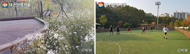 공원 곳곳에서 만난 아름다운 가을꽃(좌), 풋살장에서 운동을 즐기는 시민들(우)ⓒ박분