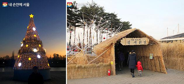 억새를 재활용한 `희망트리`(좌)와 `억새터널`(우) 모습