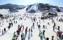 스키캠프가 진행될 웰리힐리파크 전경