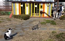 길고양이들과 사람들이 자연스레 어울려 노는 구청 옥상 쉼터 ⓒ김종성