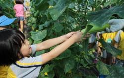 힐링체험농장 농작물 수확체험