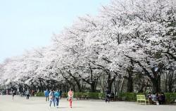 서울대공원의 봄