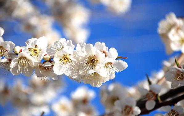 '모든 꽃이 눈부시다' 한강 봄꽃 명소 공개