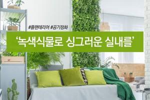 [카드뉴스] 미세먼지 잡는 녹색식물 활용법