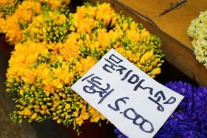 [여행스토리 호호] 3천원으로 누리는 봄