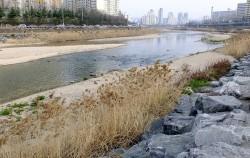 모래톱이 풍성하게 쌓인 중랑천 중류지역 ⓒ김종성