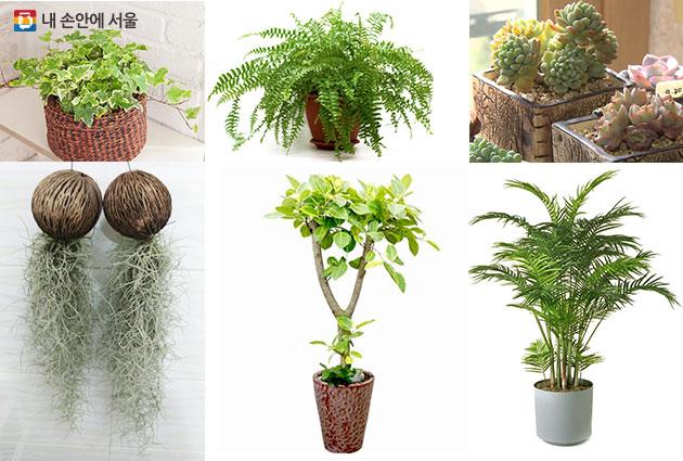 아이비, 보스톤 고사리, 다육식물, 아레카 야자, 뱅갈 고무나무, 수염 틸란드시아(왼쪽부터 시계방향으로)