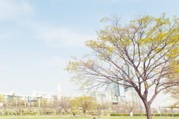 [미션]공원, 봄날의 피크닉