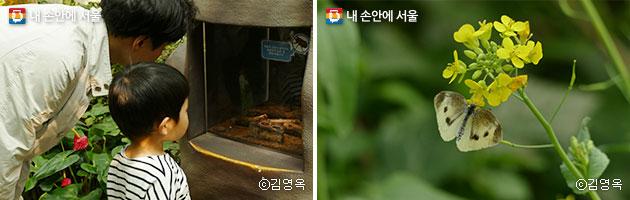 곤충식물원(좌), 나비체험관의 유채꽃과 나비(우) ⓒ김영옥