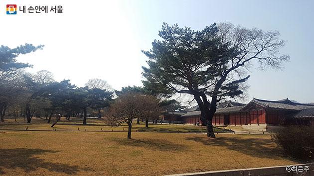 궁궐의 아름다움은 나무에서 나온다. ⓒ최은주