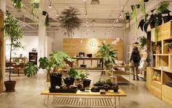 작은 화분보다 큰 화분으로, 다양한 종류의 관엽식물을 배치해야 공기정화효과가 좋다. ⓒ이현정