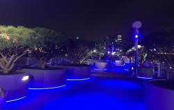 서울로 7017에 식재중인 수목들의 야경