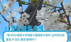 [해시파이브 #14] 서울 봄나들이 명소 TOP5