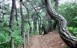 6월부터 개방되는 `남산 소나무 힐링숲`