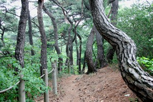 금지됐던 남산 소나무림 6월부터 '힐링숲'으로