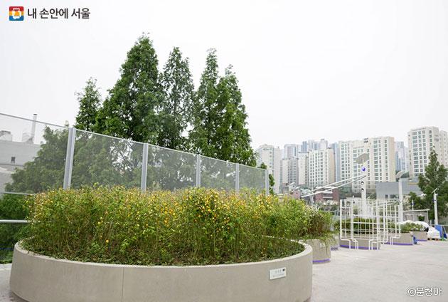 새롭게 태어난 `서울로7017`에서 많은 꽃과 나무를 볼 수 있다 ⓒ문청야